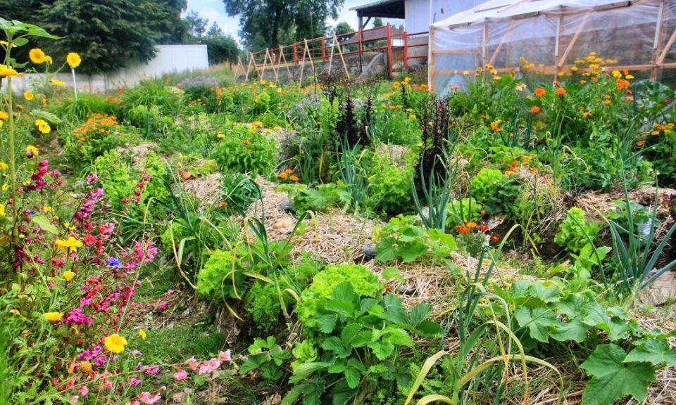 o-jardins.com-potager-permaculture