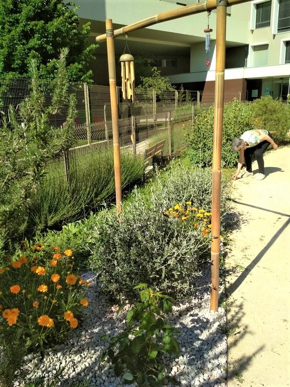 jardin therapeutique montpellier ehpad CDT- ô jardins 2